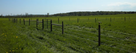 Cattle Fencing