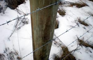 Compare Colorado Woven Wire Fences Suppliers.